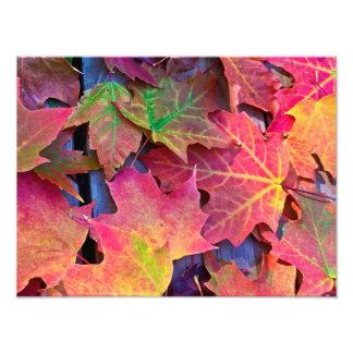Fall Leaves Photo Print