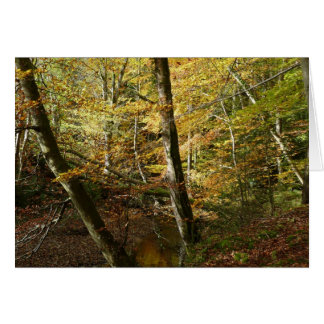 """""""Fall Leaves + Stream in Northumberland Woods"""" Card"""