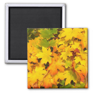 Fall Maple Leaves with Autumn Colors Fridge Magnets