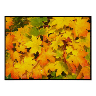 Fall Maple Leaves with Autumn Colors Posters