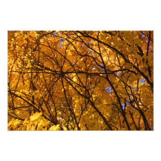 Fall Maple Patterns 2 Photo Print