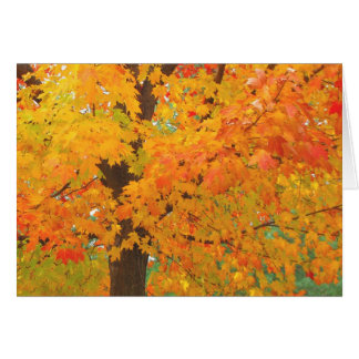 Fall Maple Tree Pioneers Park Card  6