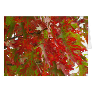 Fall Maple tree Pioneer's Park Card  8