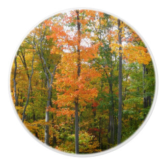 Fall Maple Trees Autumn Nature Photography Ceramic Knob