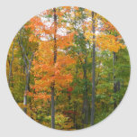 Fall Maple Trees Autumn Nature Photography Round Sticker
