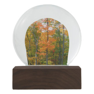 Fall Maple Trees Autumn Nature Photography Snow Globe