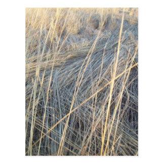 Fall Meadow Grass Postcard