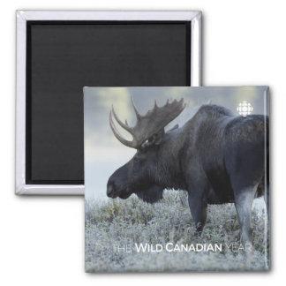 Fall - Moose Magnet