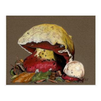 Fall Mushroom Autumn Leaves Postcard