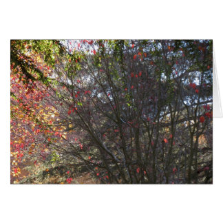 Fall, Near the Sacramento River Greeting Card