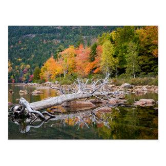 Fall of Maine Postcard