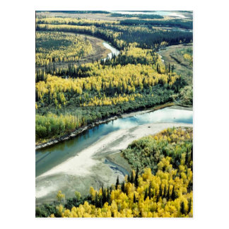 Fall on the Yukon Flats National Wildlife Refuge Postcard