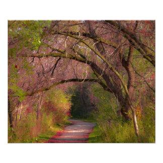 Fall Path Canada Photo Print