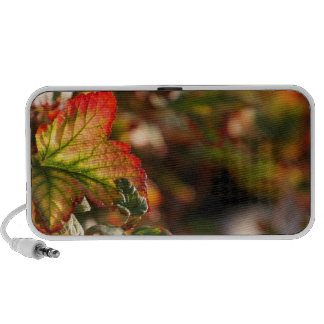 Fall radiant colored leaves on iPhone speaker.