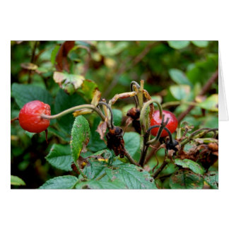 Fall Rose Hips Greeting Card
