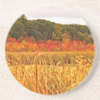 Fall Scene at Great Meadows Coaster