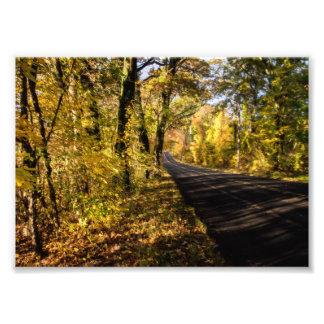 fall scenic photo art