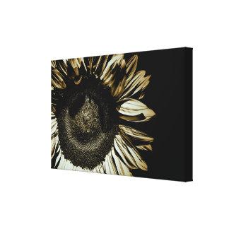 Fall Sunflower Canvas Print