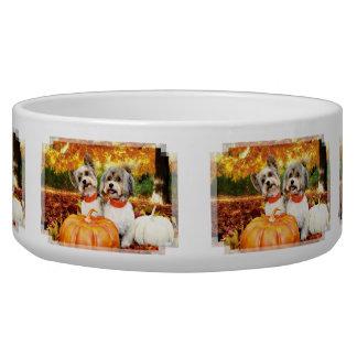 Fall Thanksgiving - Max & Leo - Yorkies