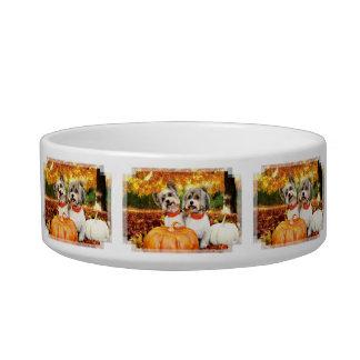 Fall Thanksgiving - Max & Leo - Yorkies Bowl