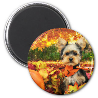 Fall Thanksgiving - Max - Yorkie Magnet