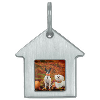 Fall Thanksgiving - Monty Fox Terrier & Milly Malt Pet Tag