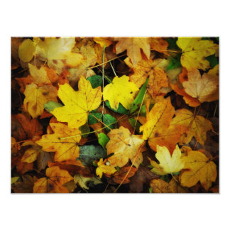 Fall-Themed Photo Print - Golden Leaves