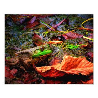 Fall Time Frog Photo Print