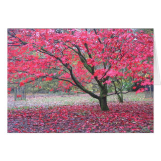 Fall Tree Card