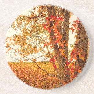Fall Tree Great Meadows National Wildlife Refuge Coaster
