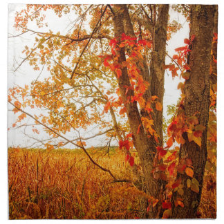 Fall Tree Great Meadows National Wildlife Refuge Napkin