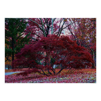 Fall Tree Landscape Poster