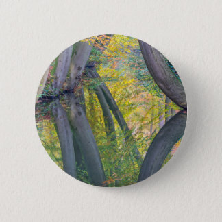 Fall tree trunks with reflection in dutch forest 6 cm round badge