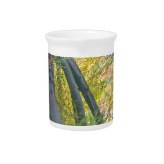 Fall tree trunks with reflection in dutch forest pitcher
