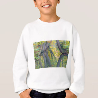 Fall tree trunks with reflection in dutch forest sweatshirt
