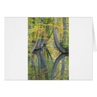 Fall tree trunks with reflection in forest water card
