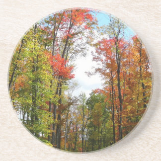 Fall Trees and Blue Sky Autumn Nature Photography Drink Coasters