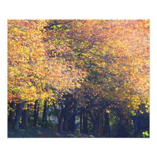 Fall trees photo art