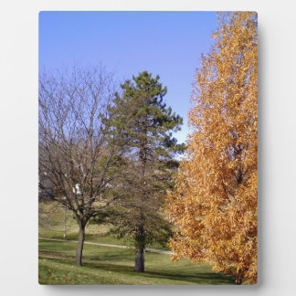 Fall Trees Plaque