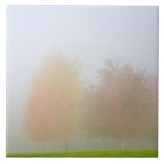 Fall trees shrouded in mist tile