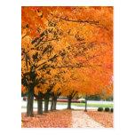 Fall walk postcard