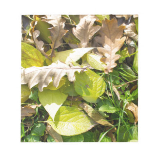 Fallen autumn leaves on green grass lawn notepads