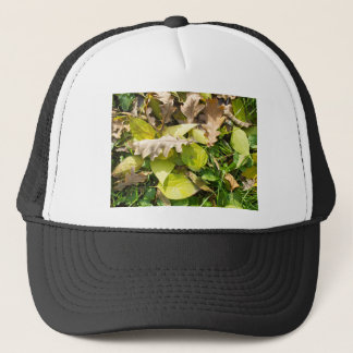Fallen autumn leaves on green grass lawn trucker hat