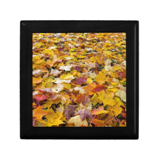 Fallen Fall Color Leaves on Parks Ground Gift Box