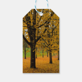 Fallen Fall Color Leaves on Parks Ground Gift Tags