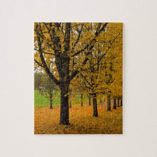 Fallen Fall Color Leaves on Parks Ground Jigsaw Puzzle