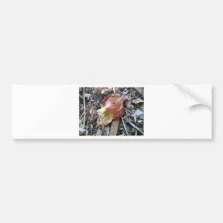 Fallen Flower Car Bumper Sticker