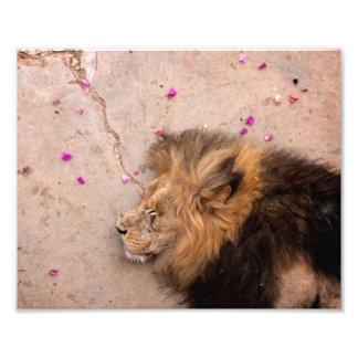 Fallen King Photo Print