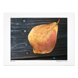 Fallen Leaf Photo Print