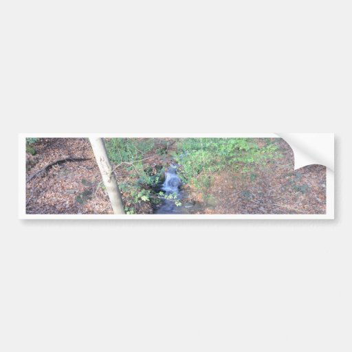 Fallen Leaves On The Forest Floor Bumper Stickers